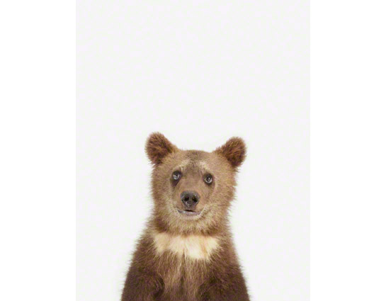 Bear-Cub-Art-for-Kids
