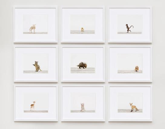 L'Arche de Noé de Sharon Montrose… Idées Déco pour chambre de bébé